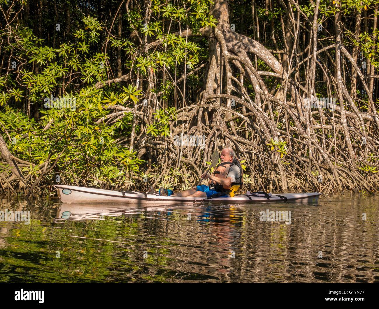 OSA PENINSULA, COSTA RICA - Man in kayak on river in mangrove swamp. - Stock Image