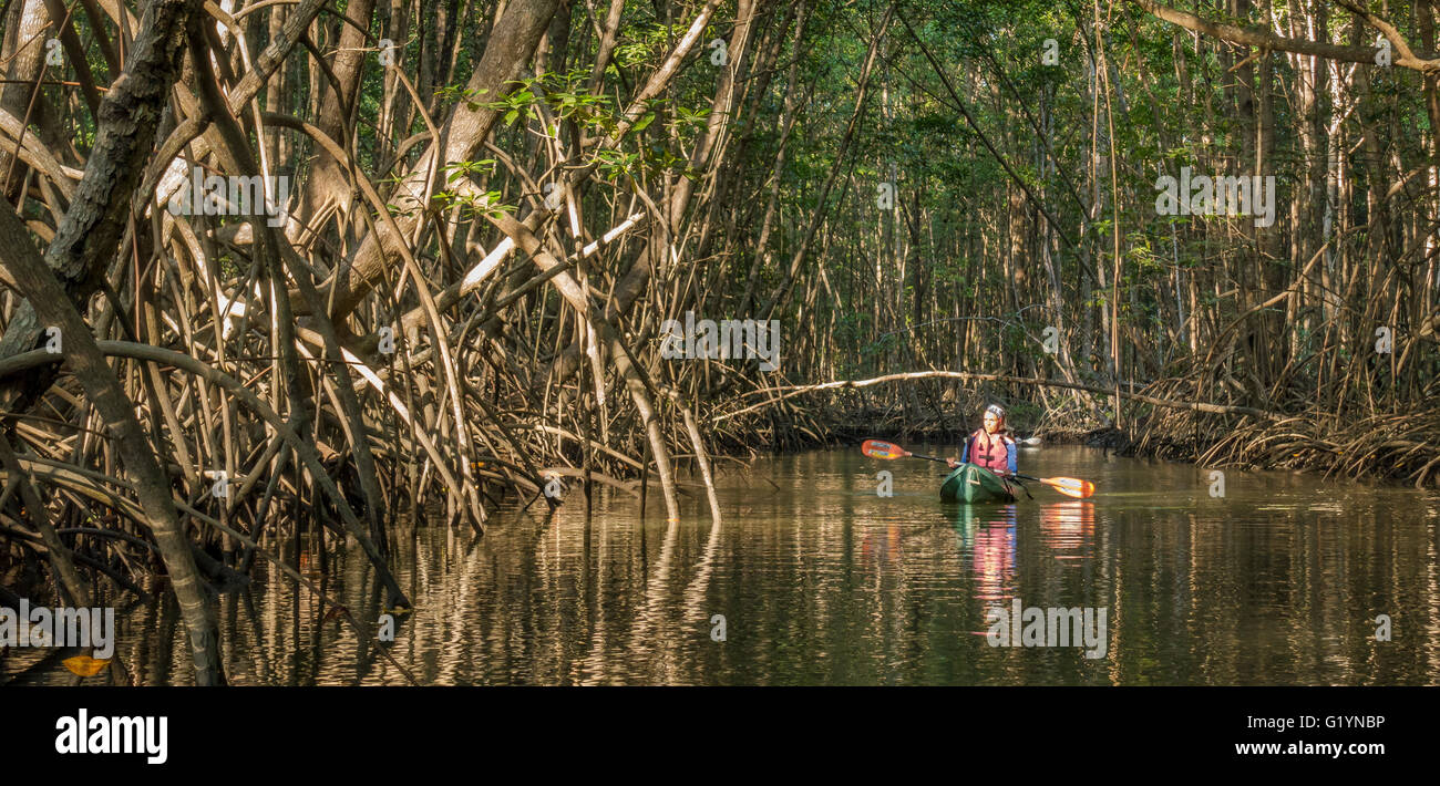 OSA PENINSULA, COSTA RICA - Woman guide  in kayak paddles through mangrove swamp. - Stock Image