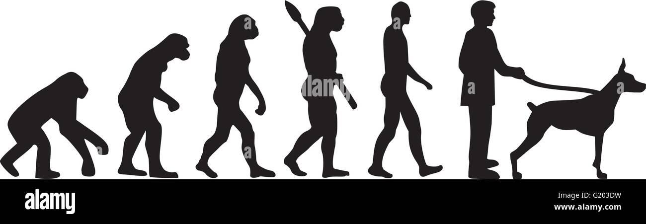 Doberman evolution - Stock Vector