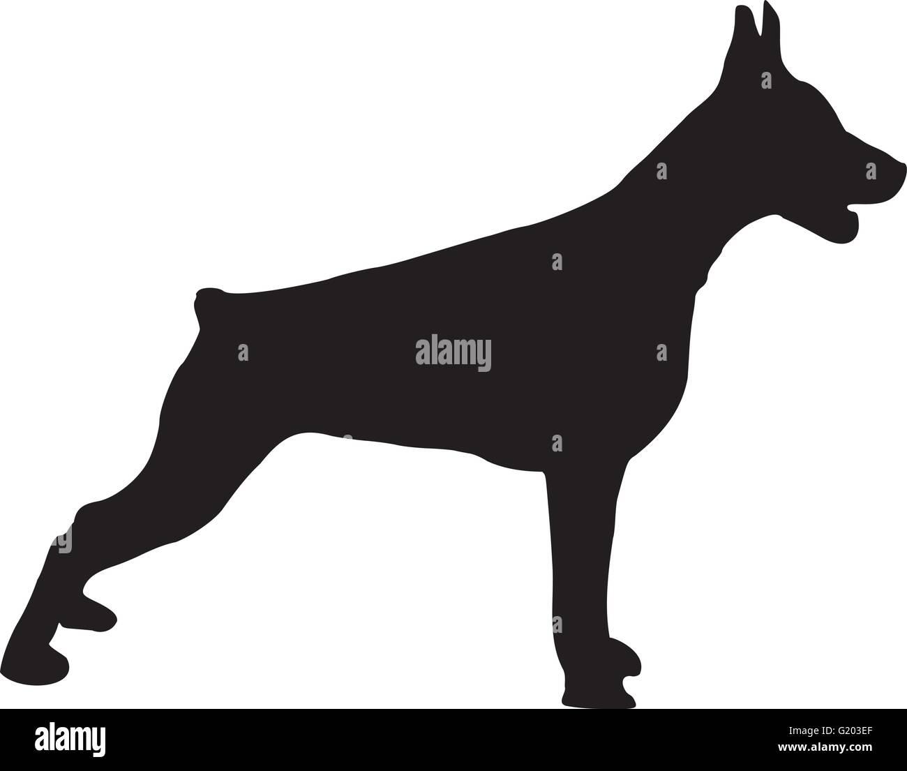 Doberman standing - Stock Vector