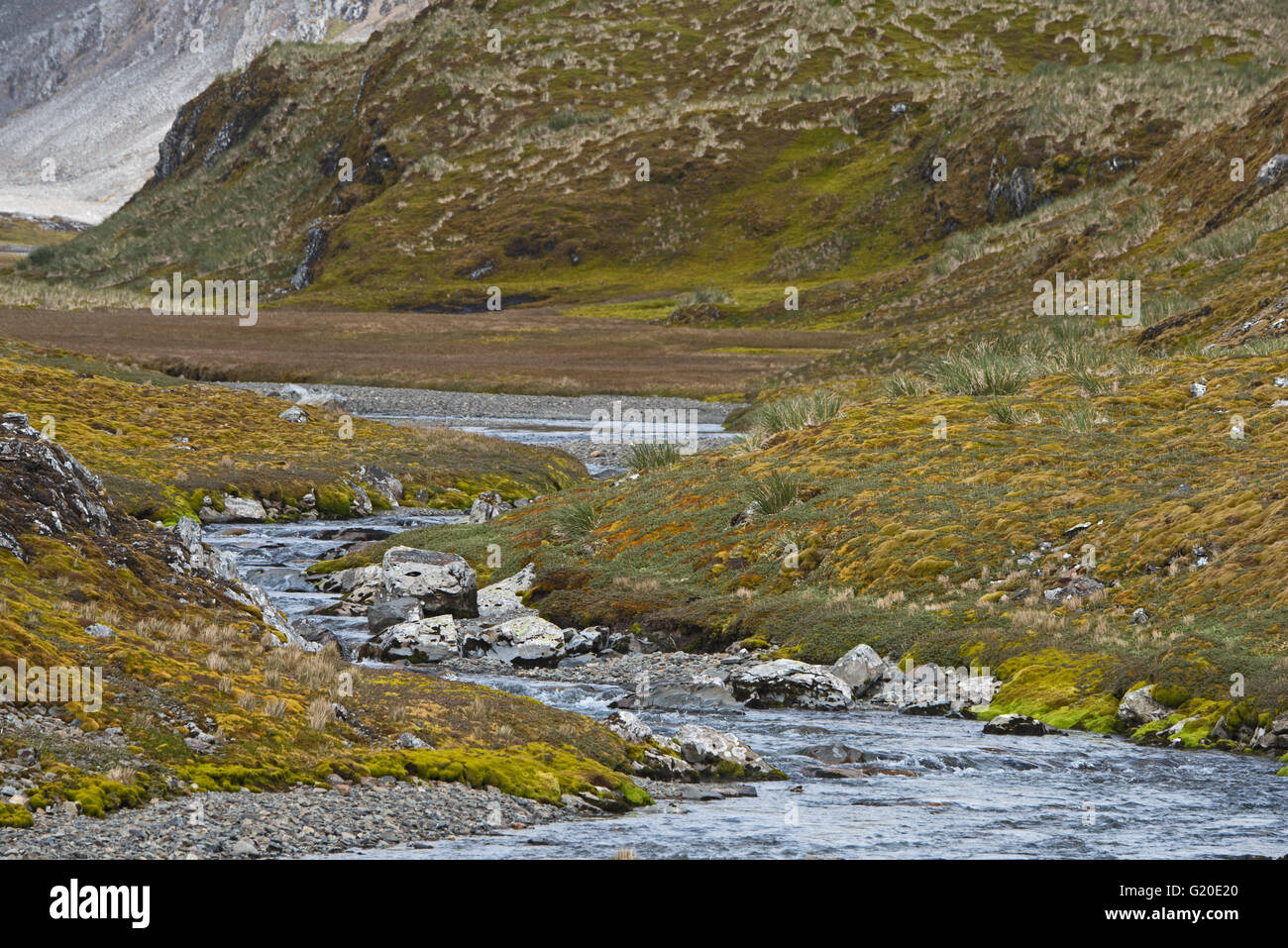 Stream & valley near Coal Harbour, South Georgia January Stock Photo