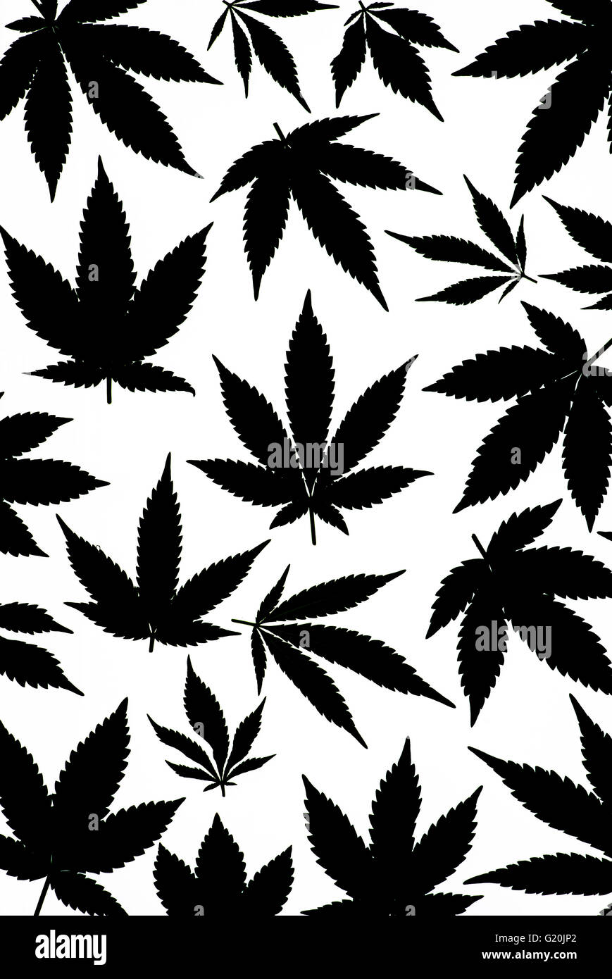 black white marijuana leaf cannabis stock photos amp black