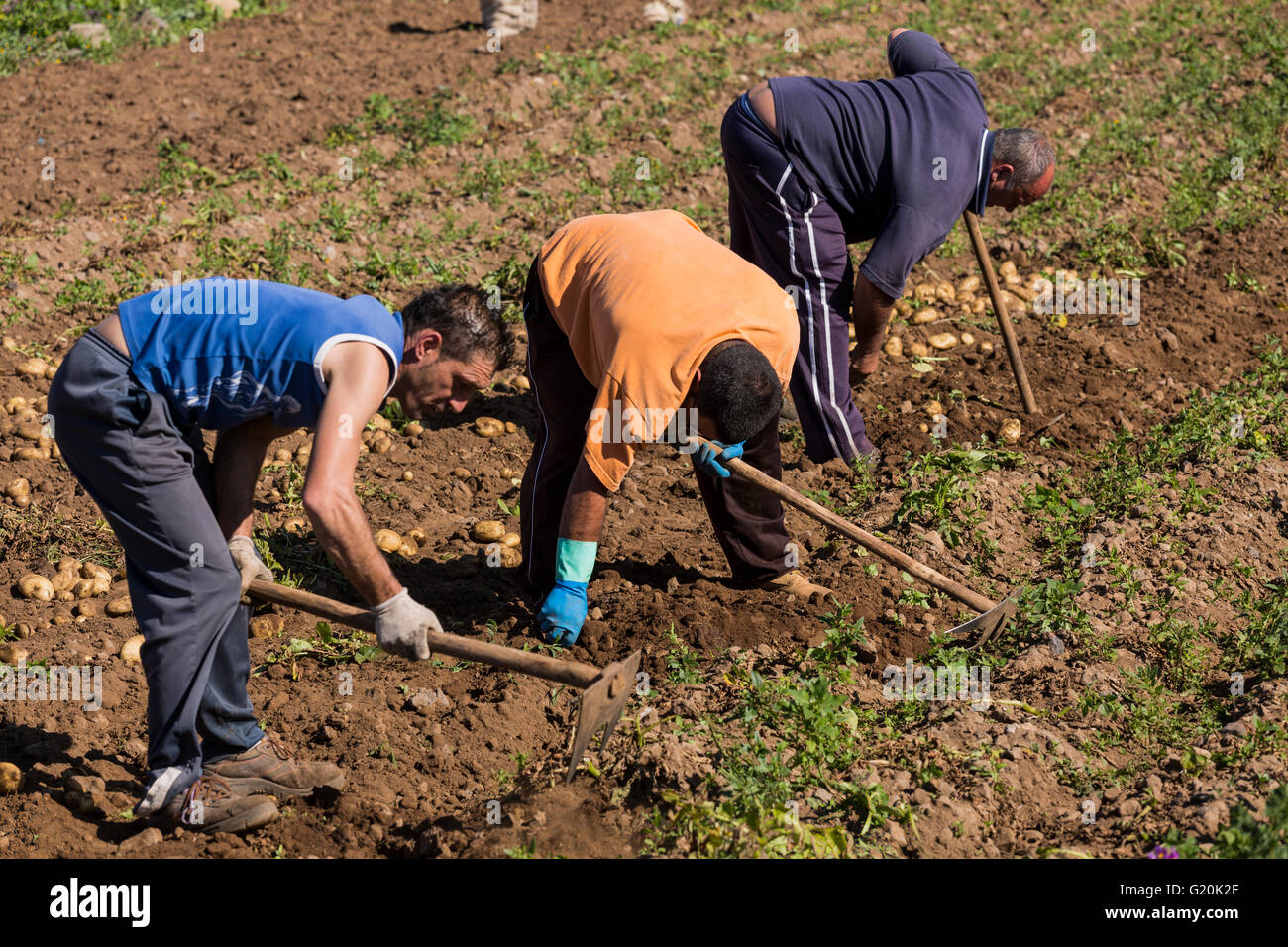 Spanish Farm Workers In Countryside Stock Photos & Spanish Farm ...