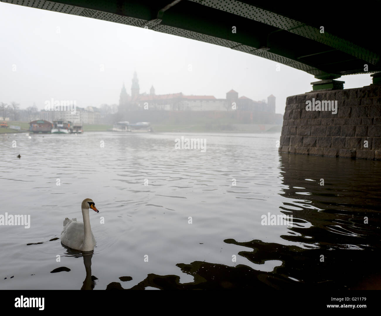 Lonely swan is under the bridge in the foggy Krakow - Stock Image
