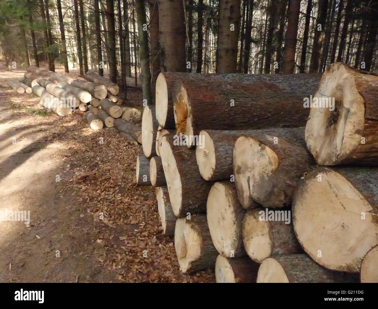 spruce, harvested, damaged, bark beetle, waste - Stock Image
