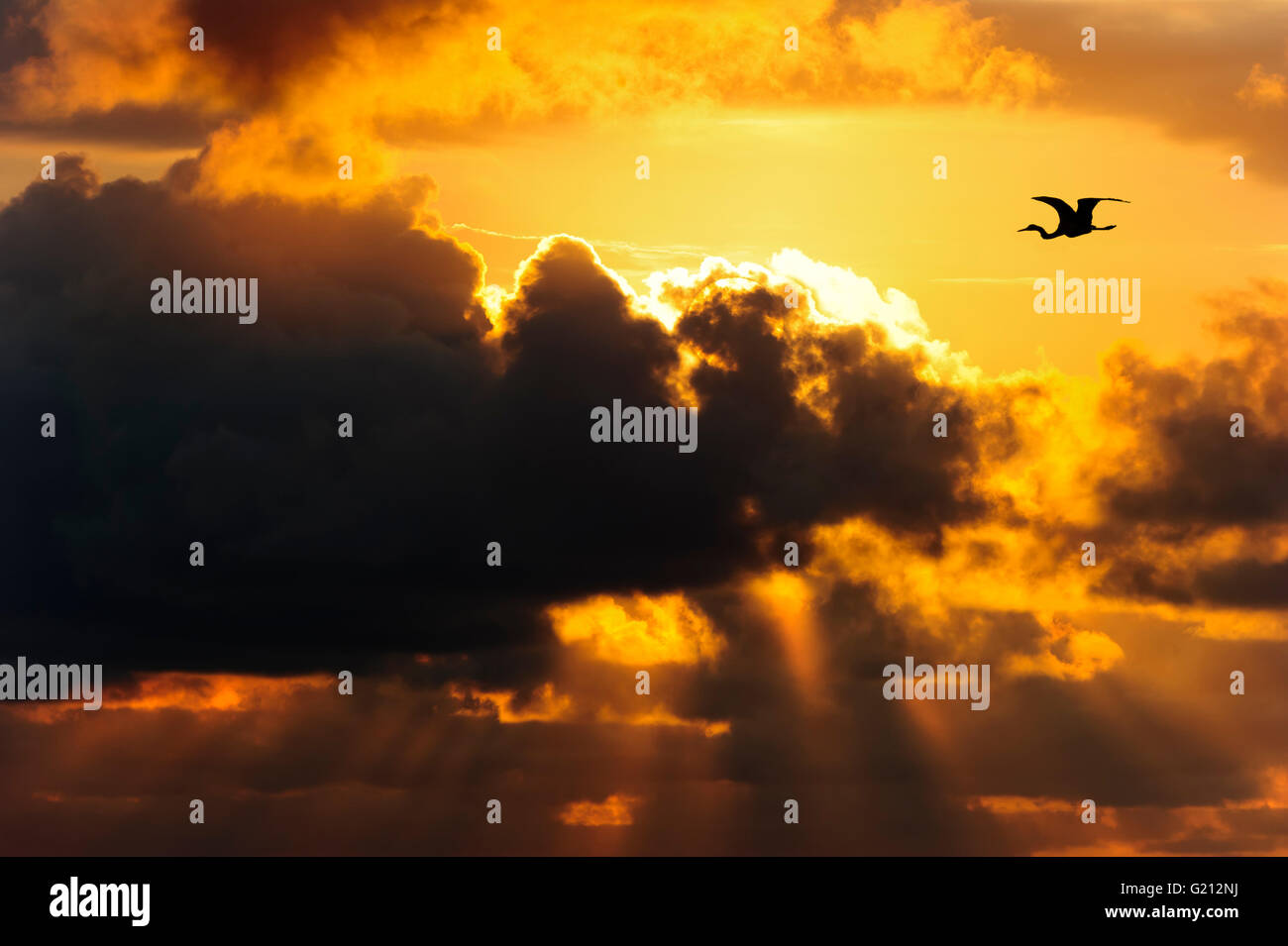 Clouds dark skies is a dramatic dark moody cloudscape with bird silhouetted against a bright sun filled sky. - Stock Image