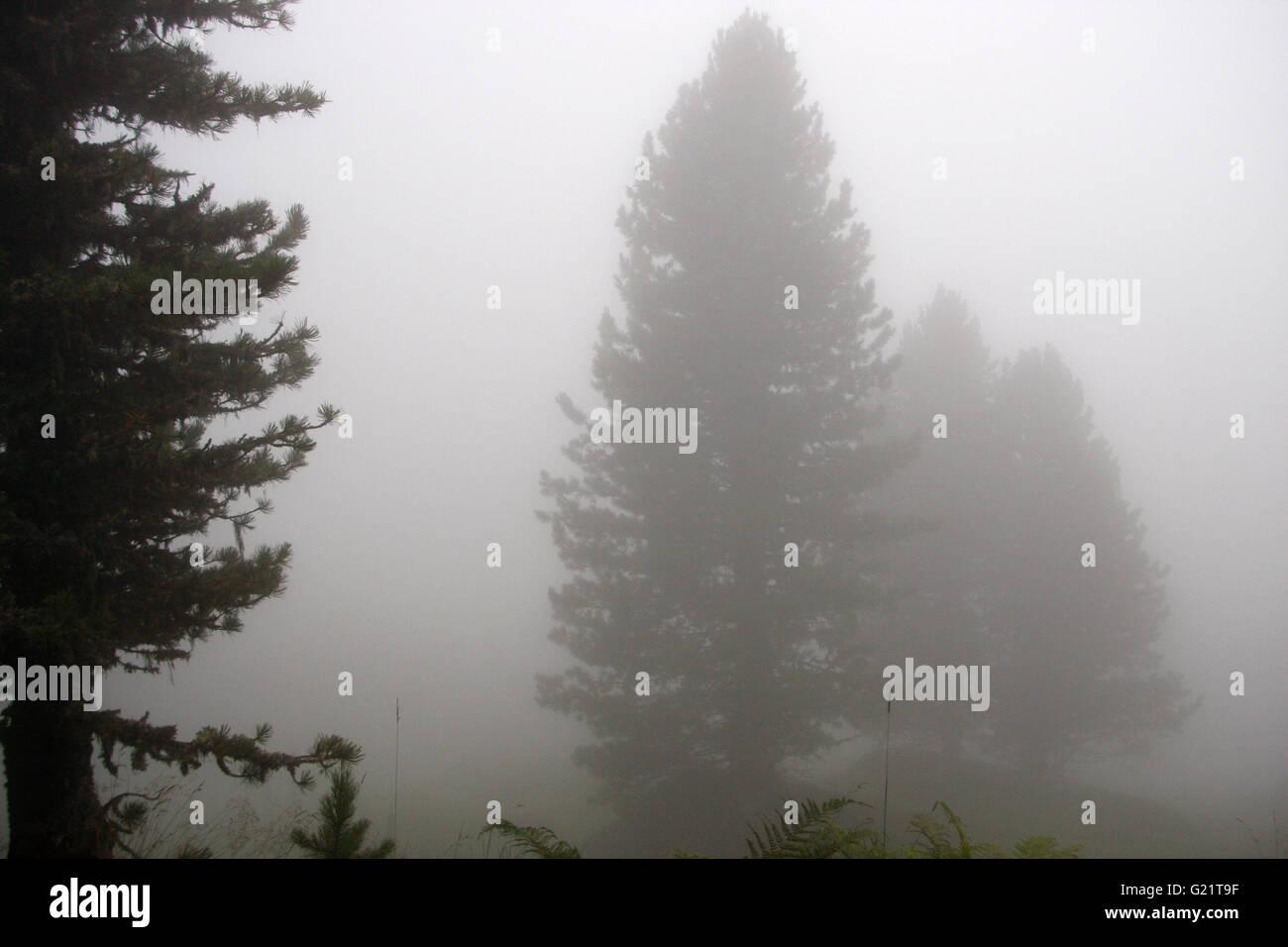 Nebel, Kreuzjoch, Kitzbuehler Alpen, Oesterreich. - Stock Image