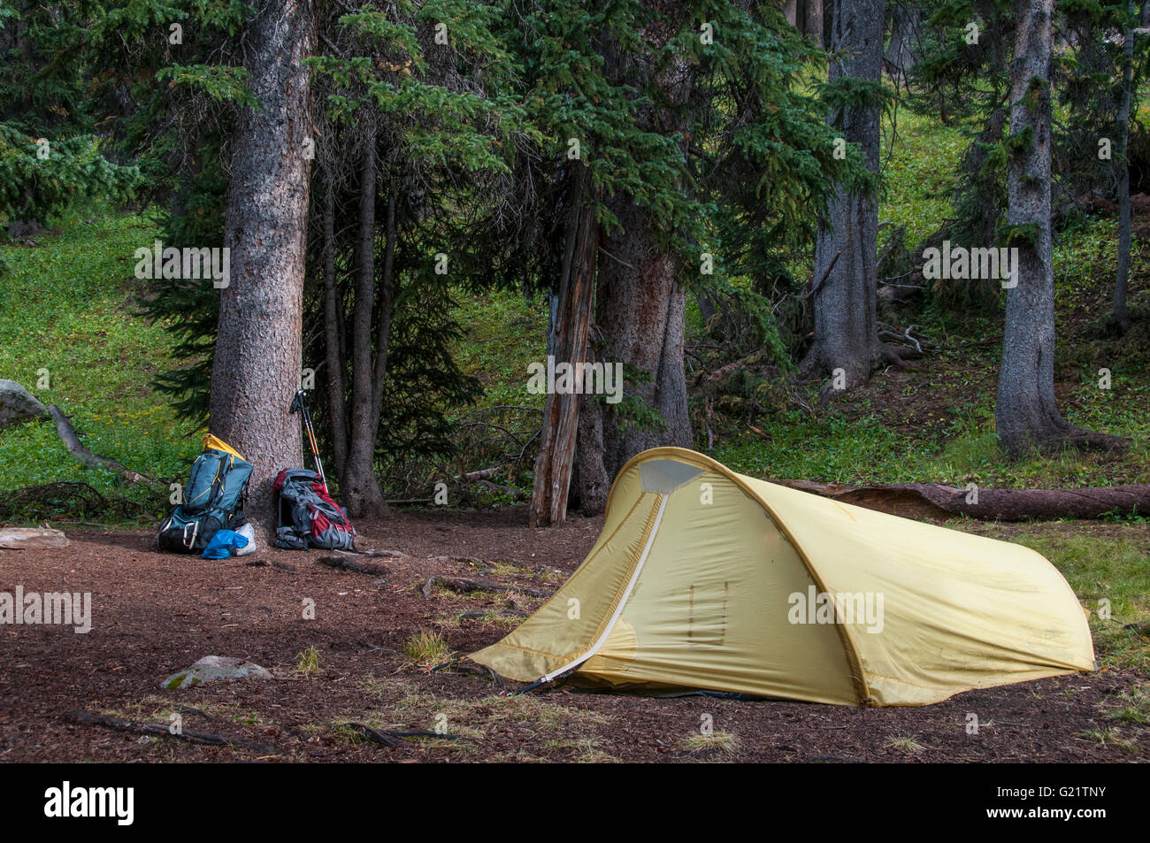 Campsite, Chicago Basin, Columbine Pass Trail, Weminuche Wilderness Area, San Juan National Forest, Colorado. - Stock Image