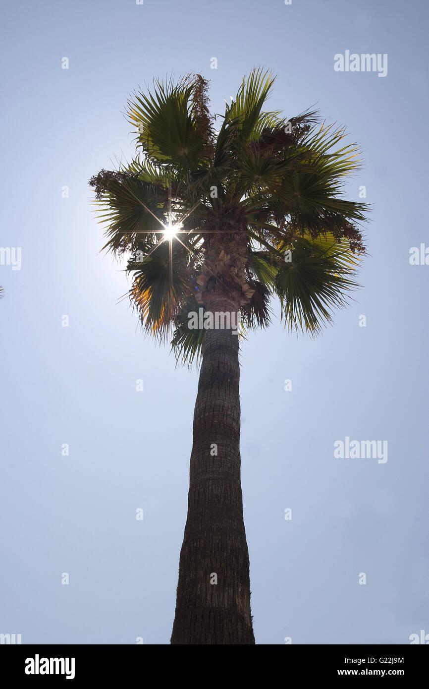 Palma de Maoirca, photoarkive Stock Photo
