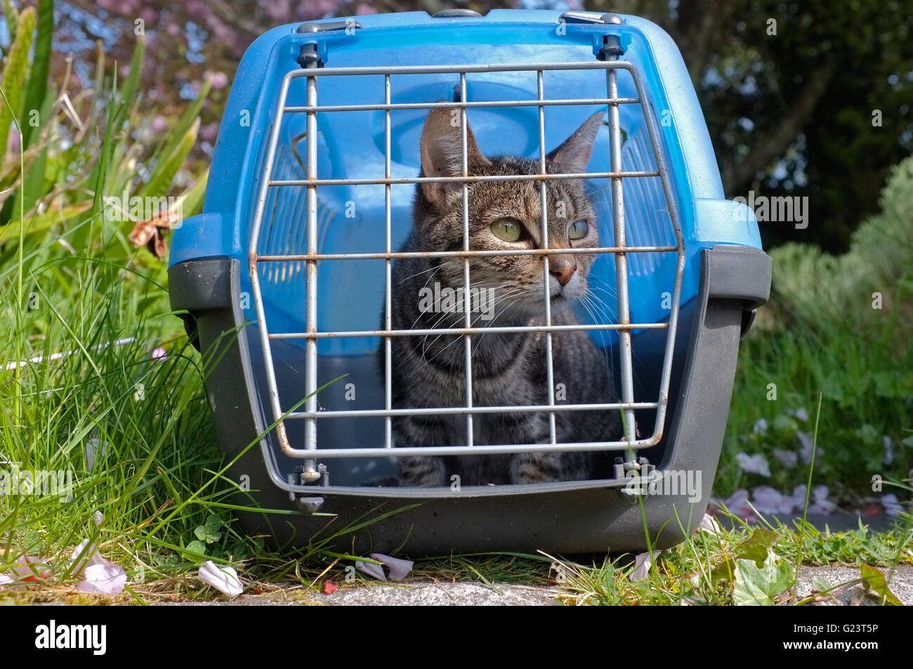 Basket Carrier Stock Photos & Basket Carrier Stock Images - Alamy