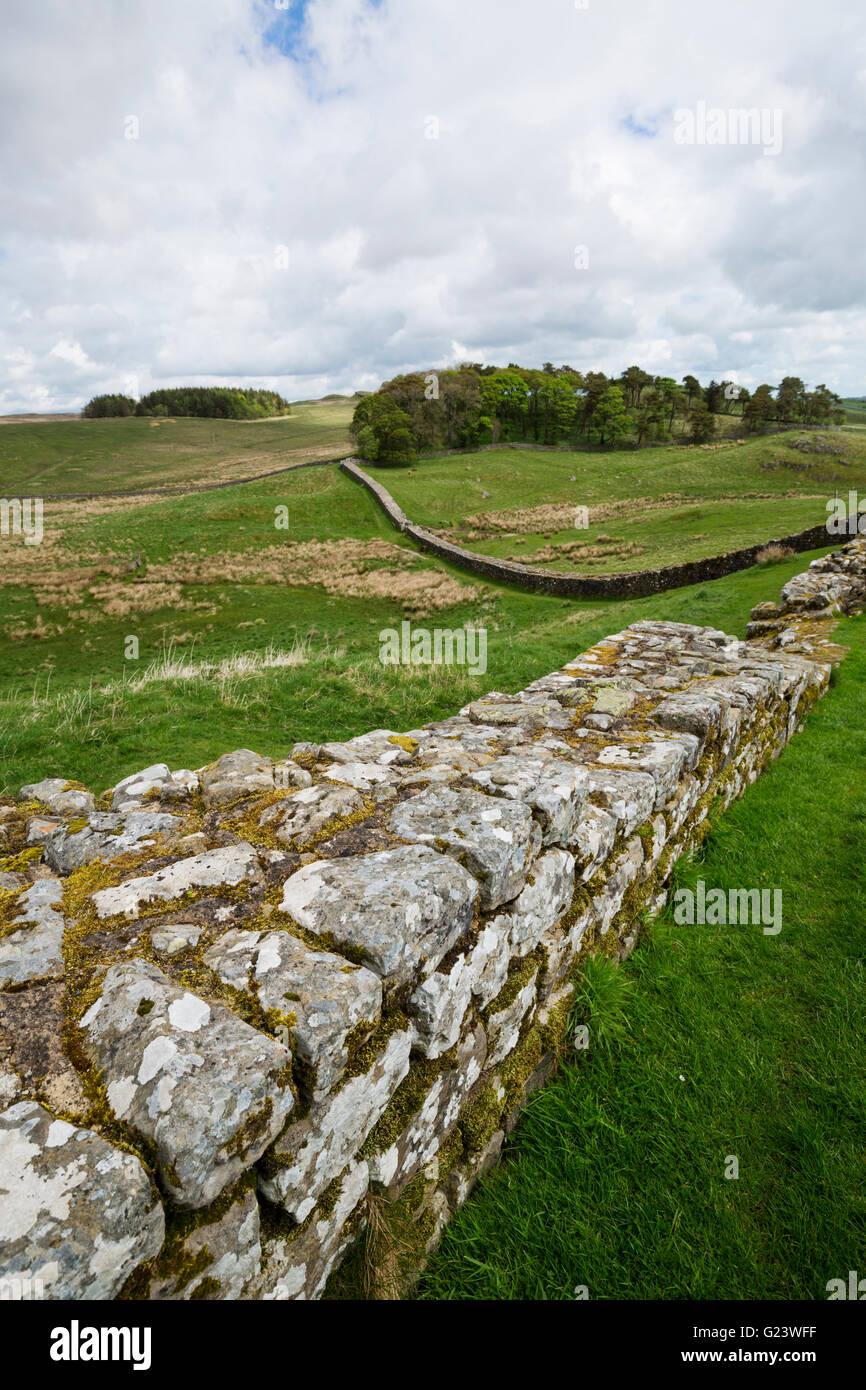 Hadrians wall in Northumberland - Stock Image