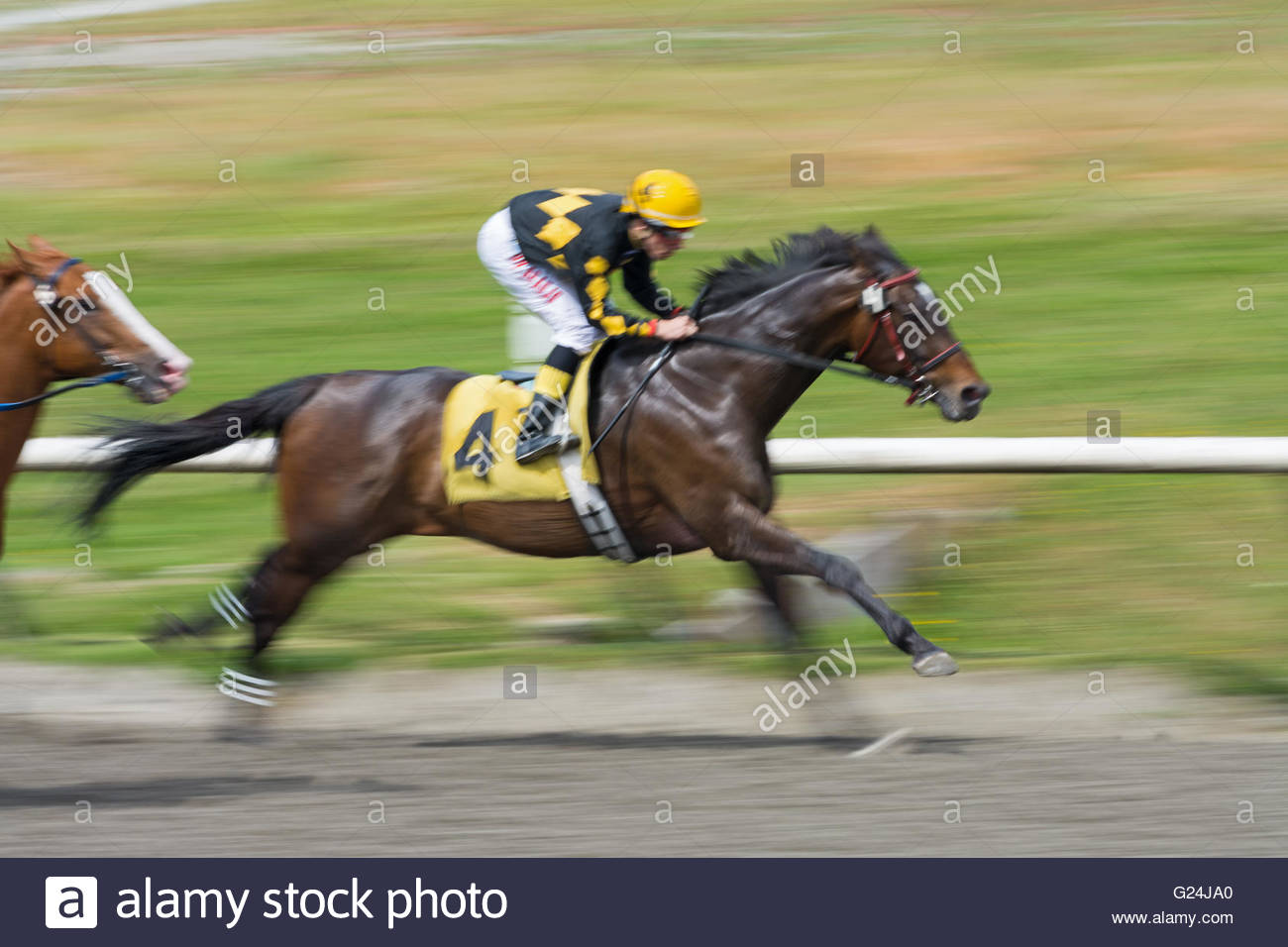 Panned image of Jockey Denis Aroujo riding Similkameen Joey during Race 3 Claiming at the Hastings Racecourse in Stock Photo