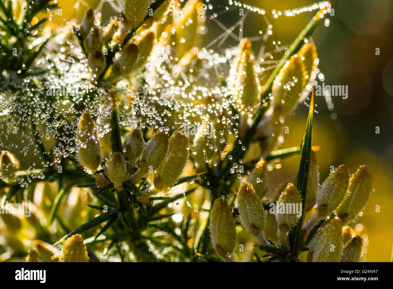 dew on flowers