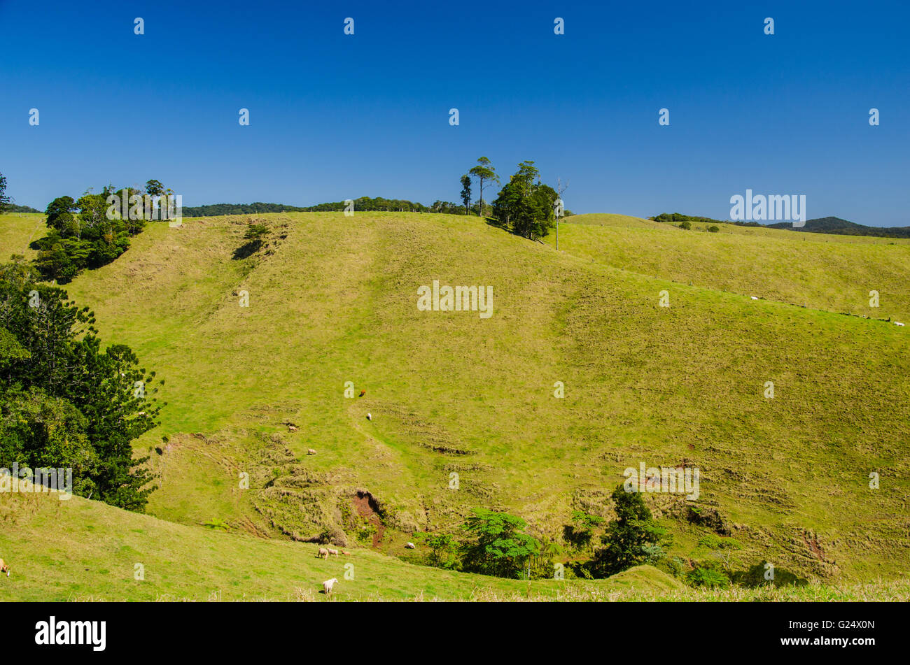 Meadowland in the Atherton Tableland. - Stock Image