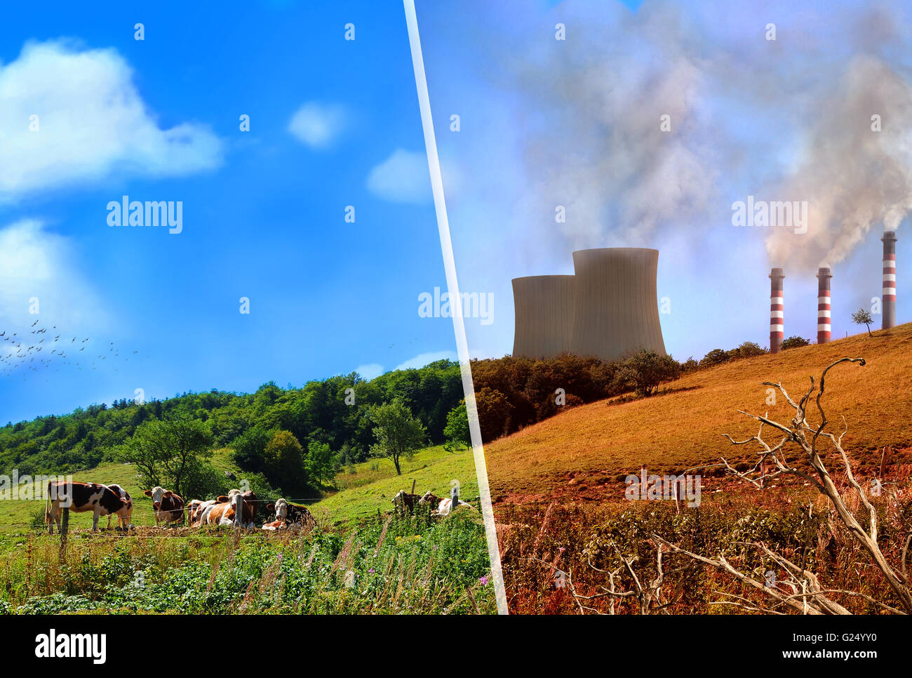 Comparison Of A Landscape Clean And Healthy And Dirty And