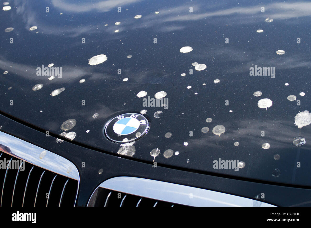BMW at risk of damage from bird droppings in Fleetwood, Thorton-Cleveleys, Flyde Coast, Lancashire, UK - Stock Image