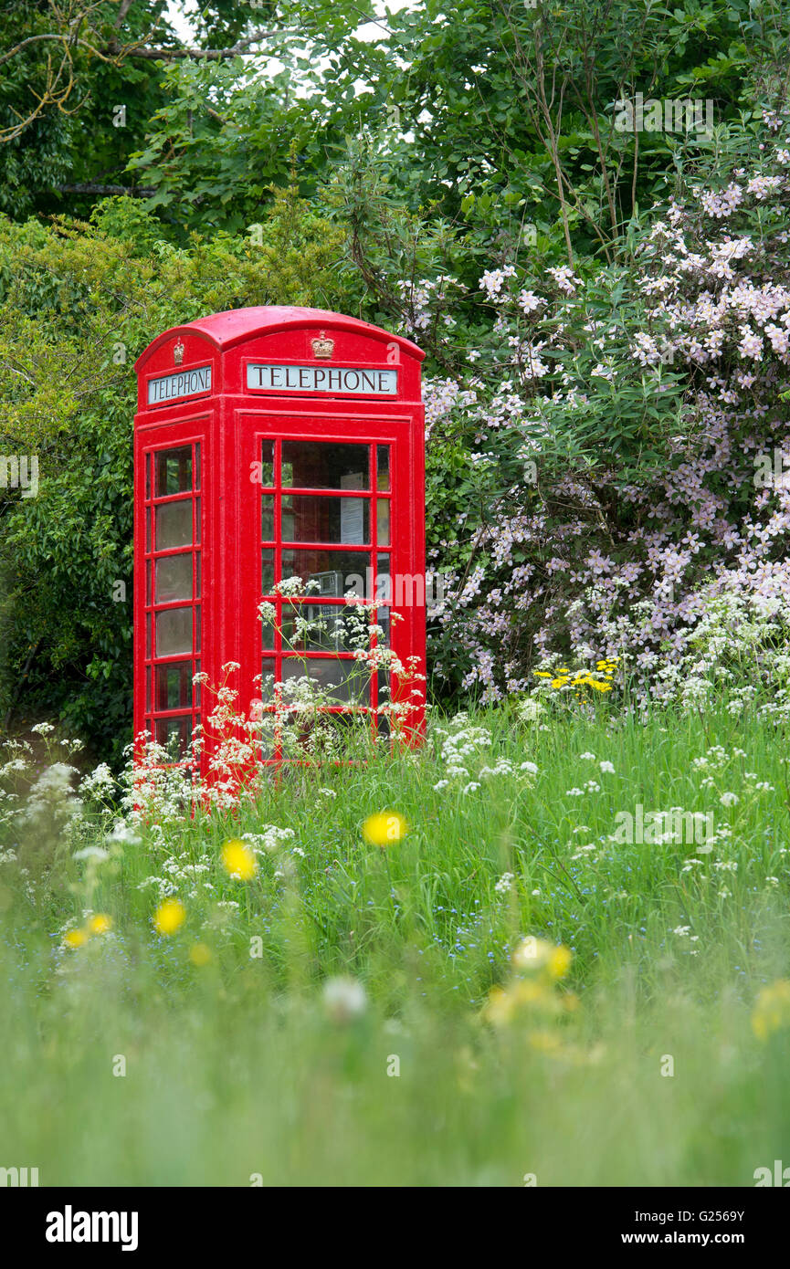 Old red telephone box in the cotswolds surrounded by clematis flowers and grass. Maugersbury, Cotswolds, Gloucestershire, - Stock Image