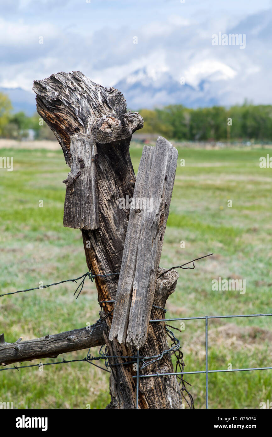 Barbed wire on ranch meadow wooden fencepost; central Colorado; USA - Stock Image