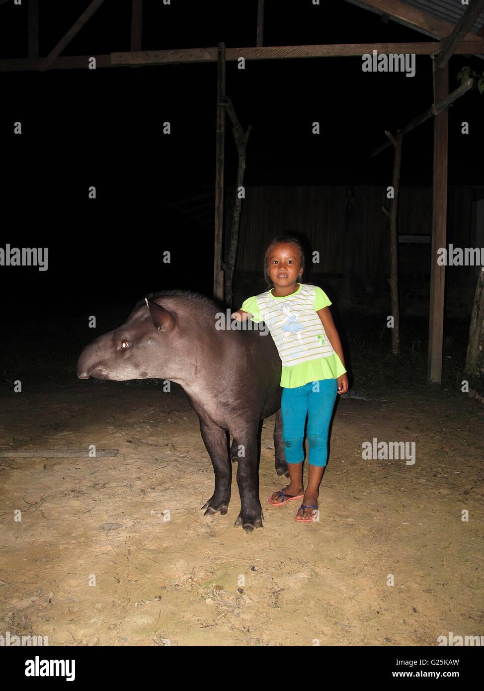 Brazilian tapir (Tapirus terrestris), with kid. Angamos. Amazonas. Peru - Stock Image
