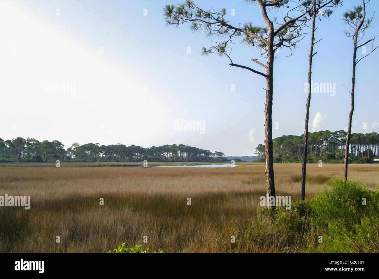 St. Joseph's Peninsula State Park, FL. Stock Photo