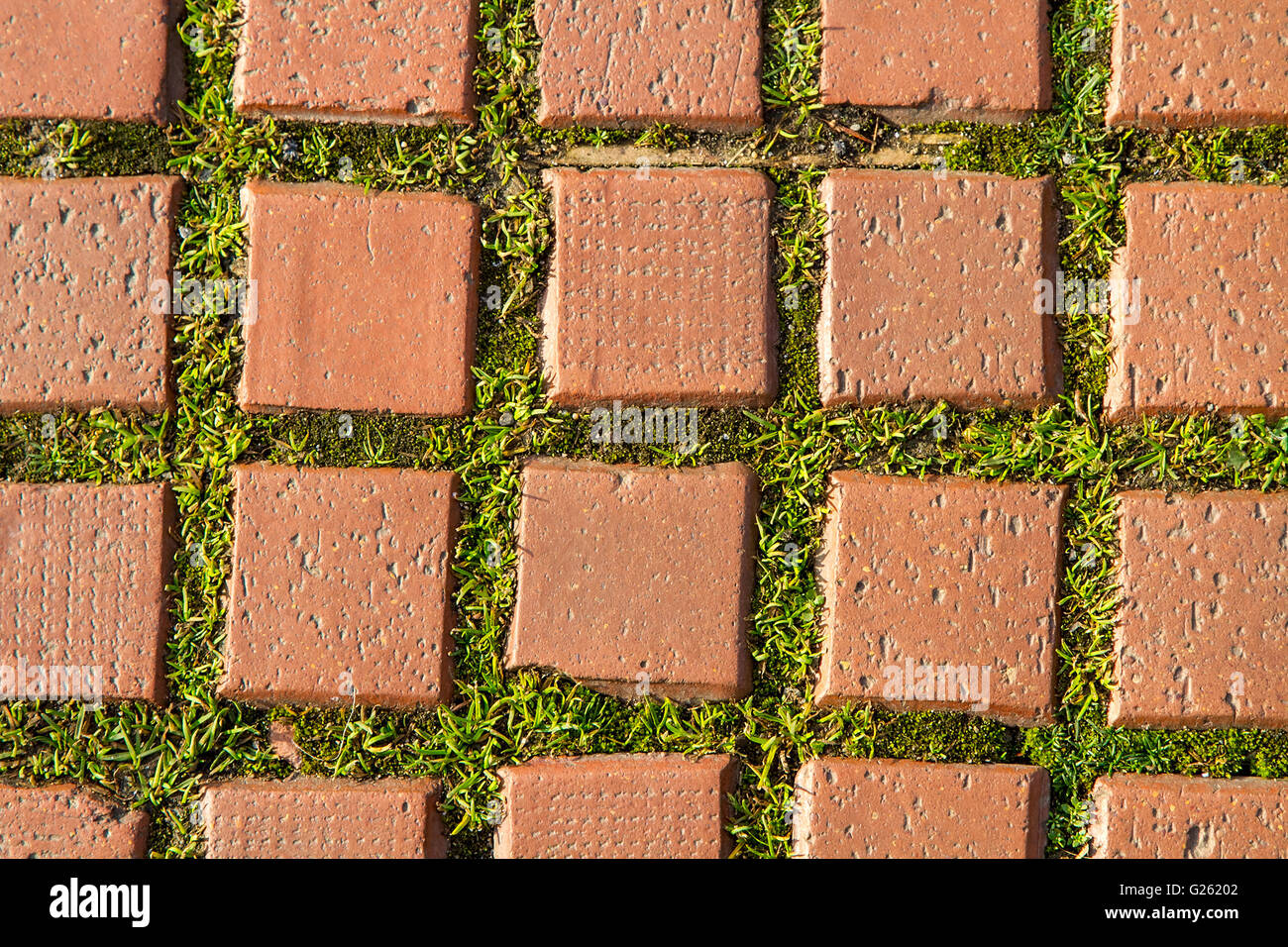 grass brick stone path texture green pavement sidewalk floor paving background road block garden pattern nature - Stock Image