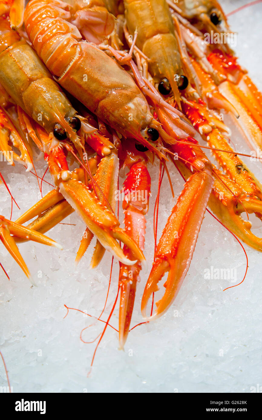 Group of fresh Norway lobsters placed on ice ready to be sold - Stock Image