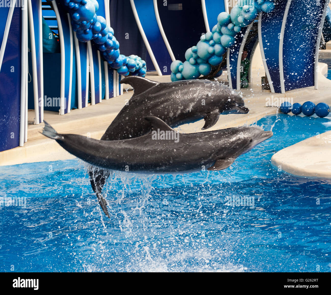 Dolphins at sea world - Stock Image