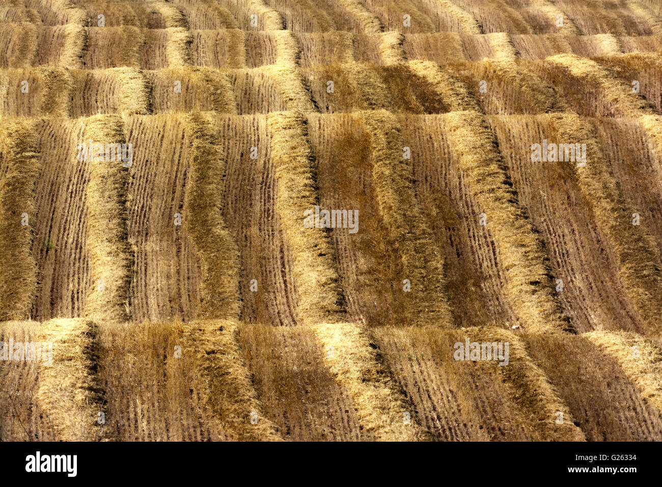 Hilly field, Wave pattern, Israel - Stock Image