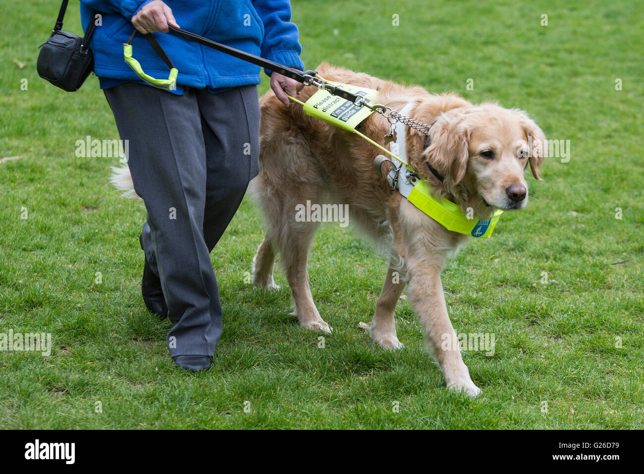 london uk 25 may 2016 100 guide dog owners with their guide dogs rh alamy com benefits of guide dog ownership guide for new dog owners