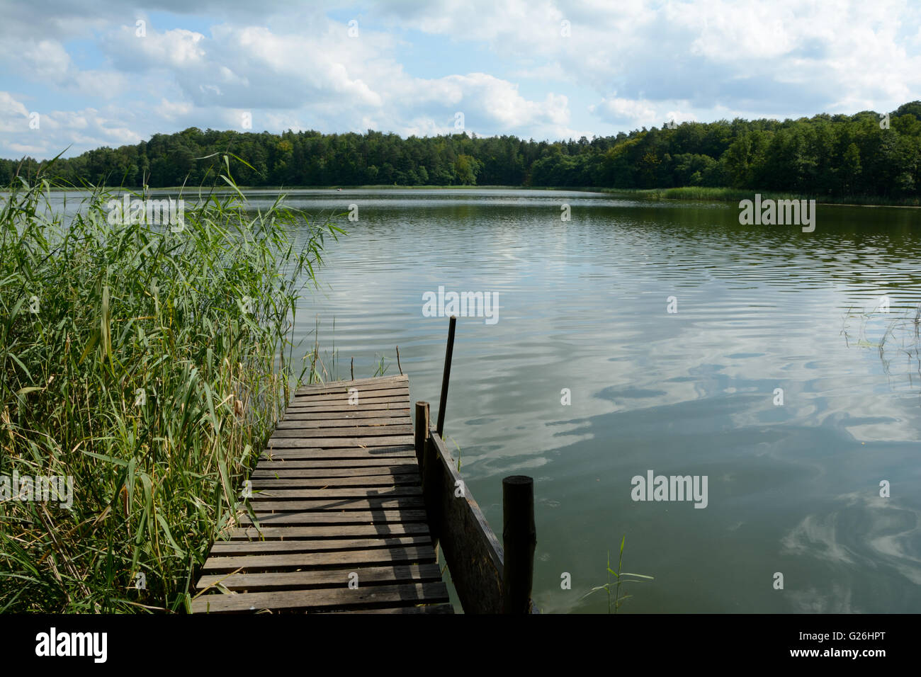Old wooden pier, cane and forest at lake. Stock Photo