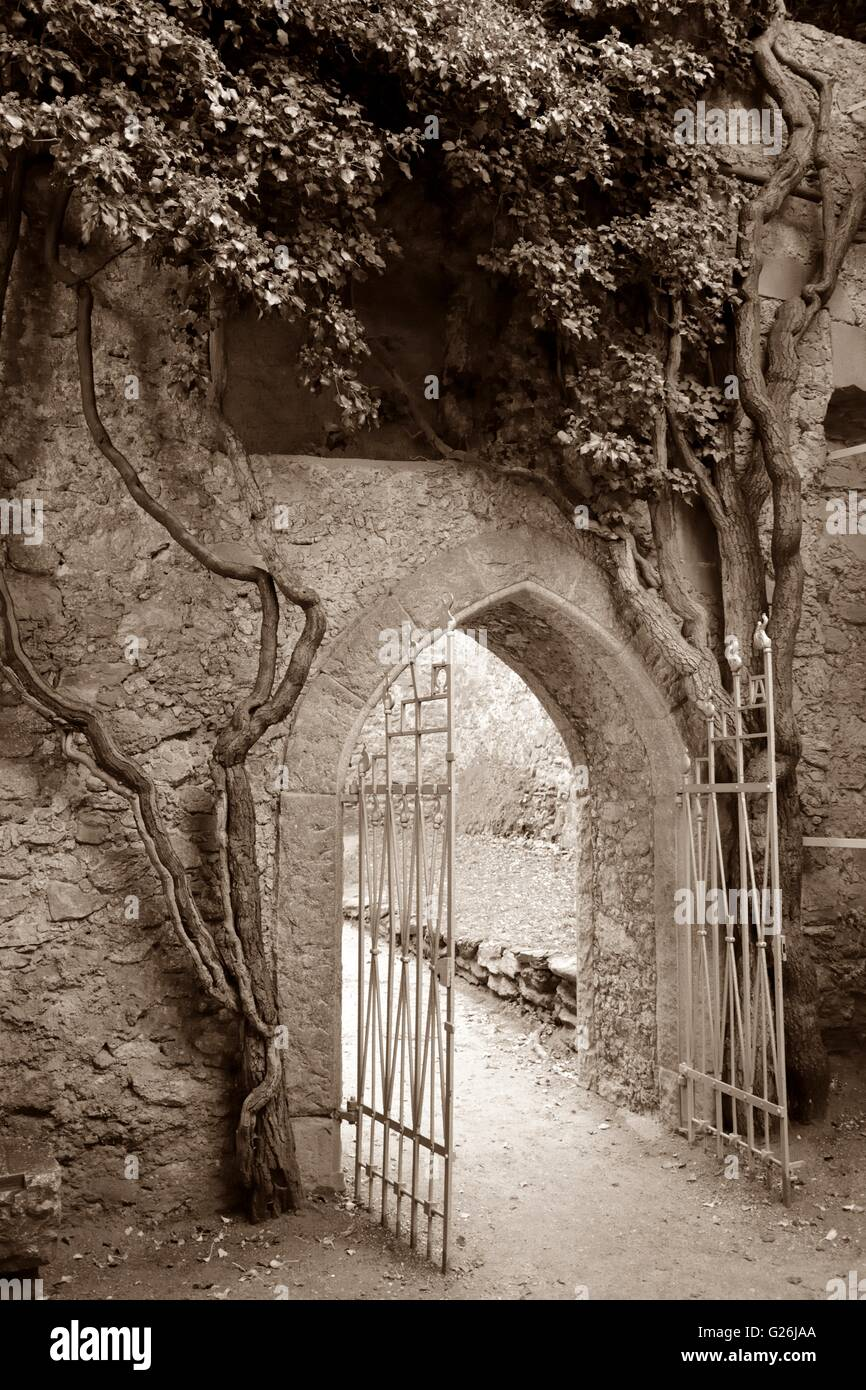 Speia toned gate and old ivy tree in castle ruins. - Stock Image