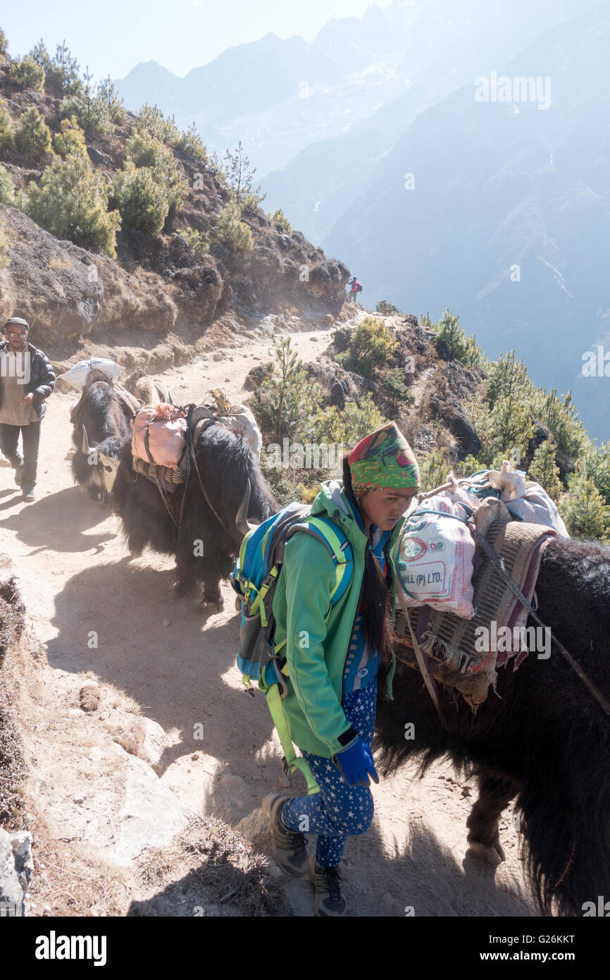 Yak herders with yaks on trail to Everest, Himalayas, Khumbu region, Nepal, Asia - Stock Image