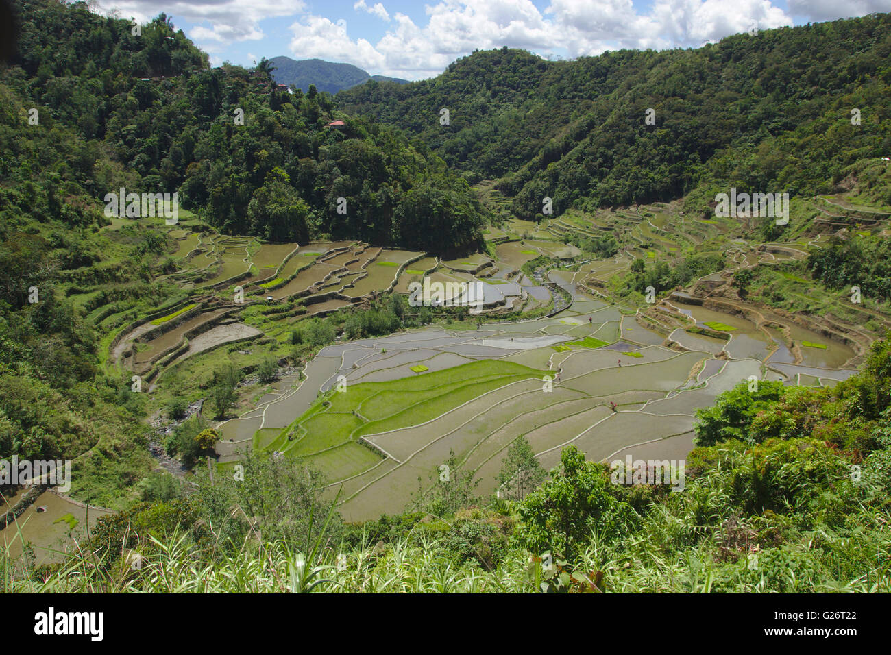 Ifugao rice terraces east of Banaue, Luzon, Philippines - Stock Image