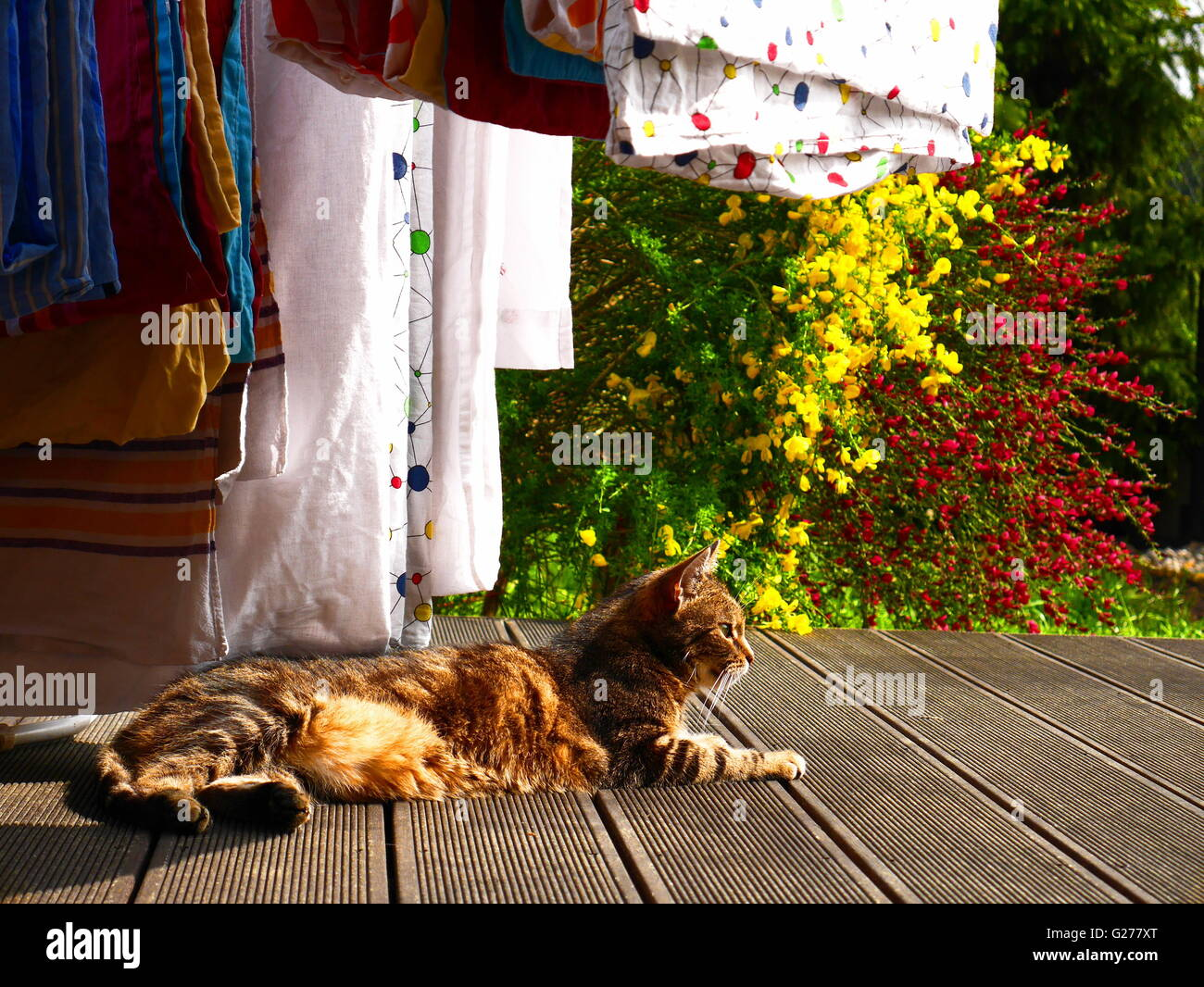 Resting cat - Stock Image