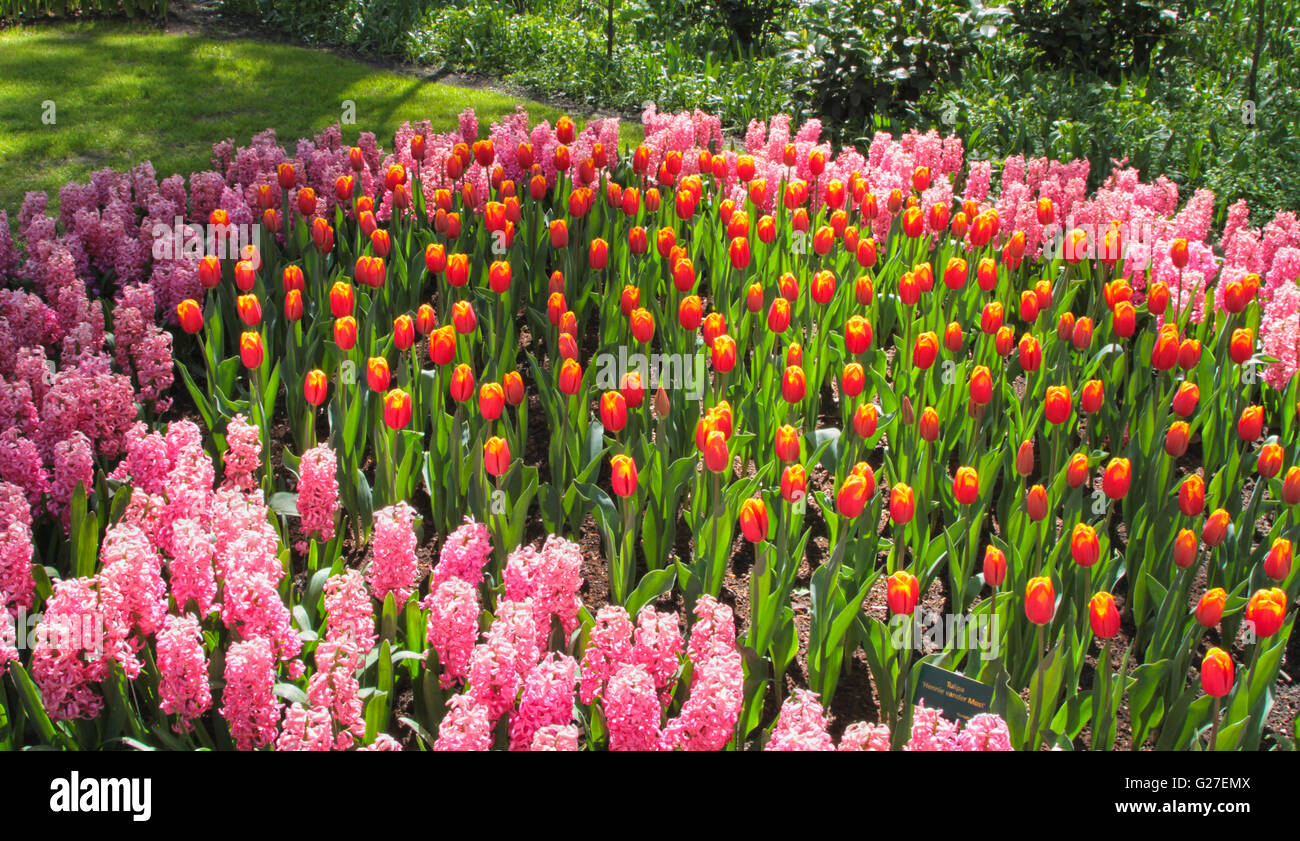 park flower garden view famous keukenhof bed japan green color Stock ...