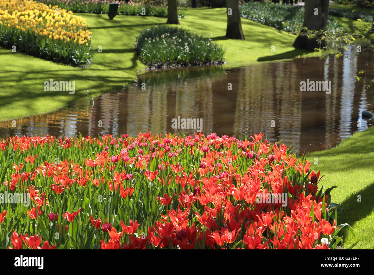 Park Flower Garden View Famous Keukenhof Bed Japan Green Color