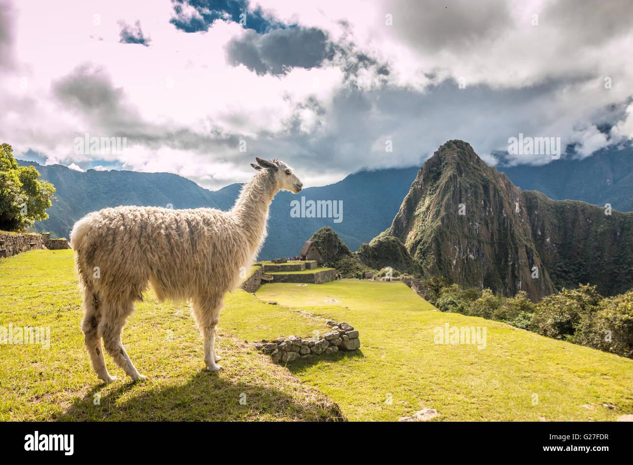 Machu Picchu in Peru - Stock Image