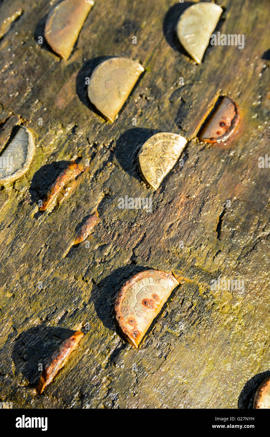 Coins hammered into fallen tree at Brock Bottom in the Forest of Bowland AONB Lancashire England - Stock Image