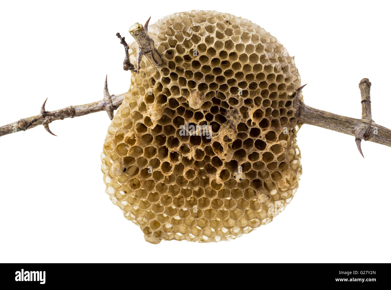 Natural Beehive Isolated On White Background And Clipping Path