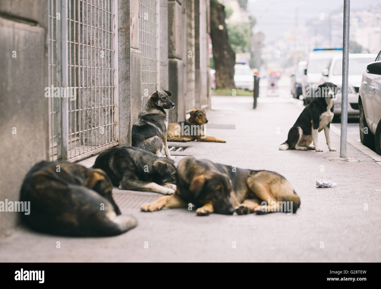 Dogs on the street - Stock Image