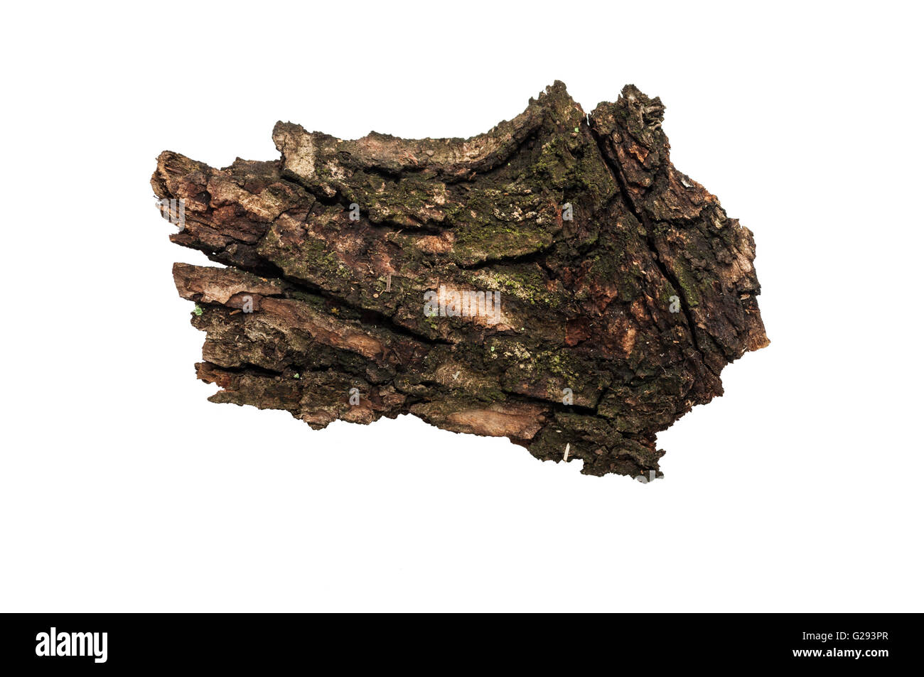 Piece of old bark or rind isolated on white background - Stock Image