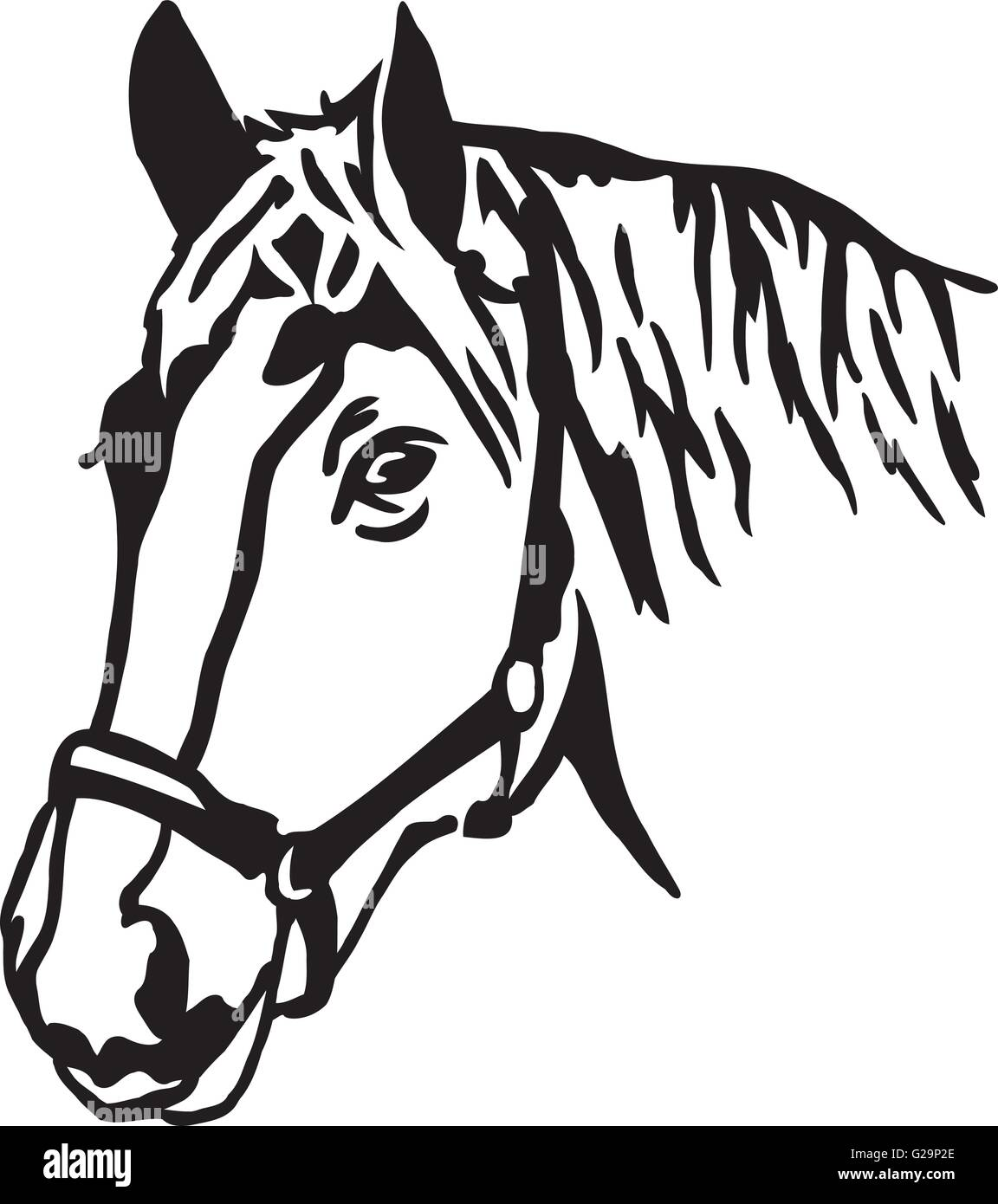 real horse head vector stock vector art illustration vector image rh alamy com horse head vector black and white horse head vector black and white