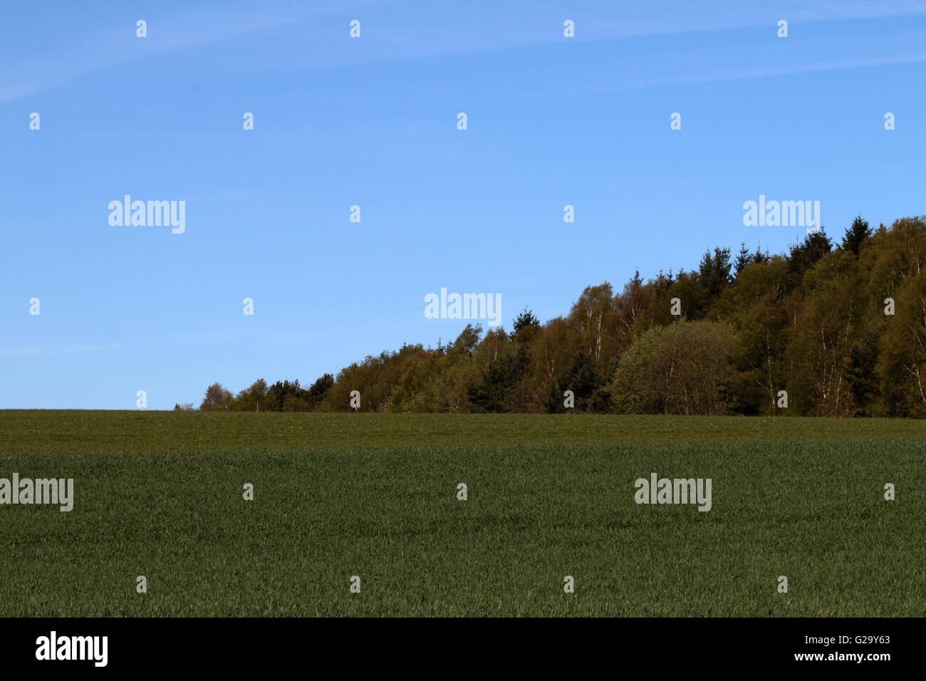 Wiese am Waldrand im Frühling  Meadow near the forest in spring - Stock Image
