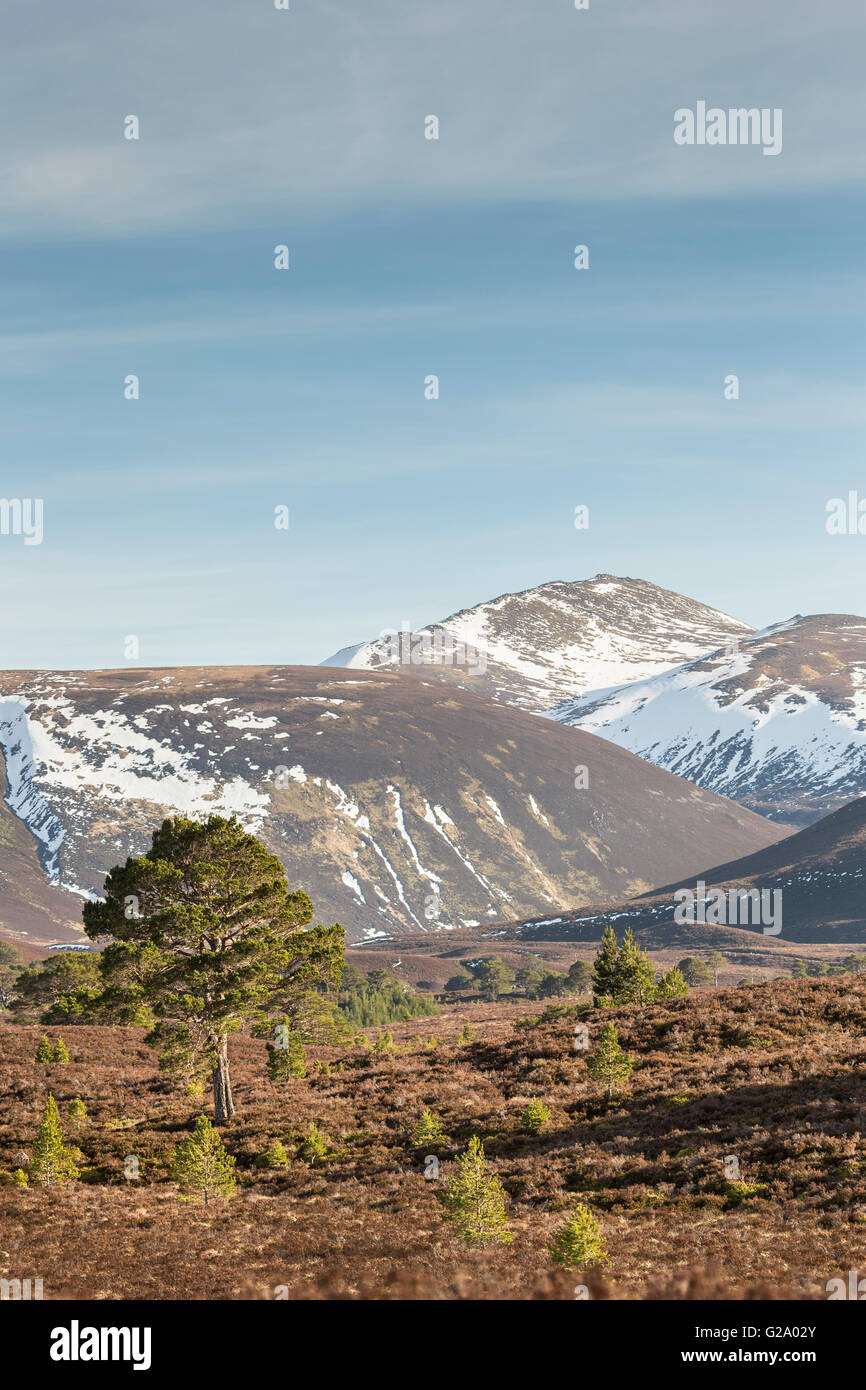 Bynack More from the Ryvoan Pass in the Cairngorms. - Stock Image