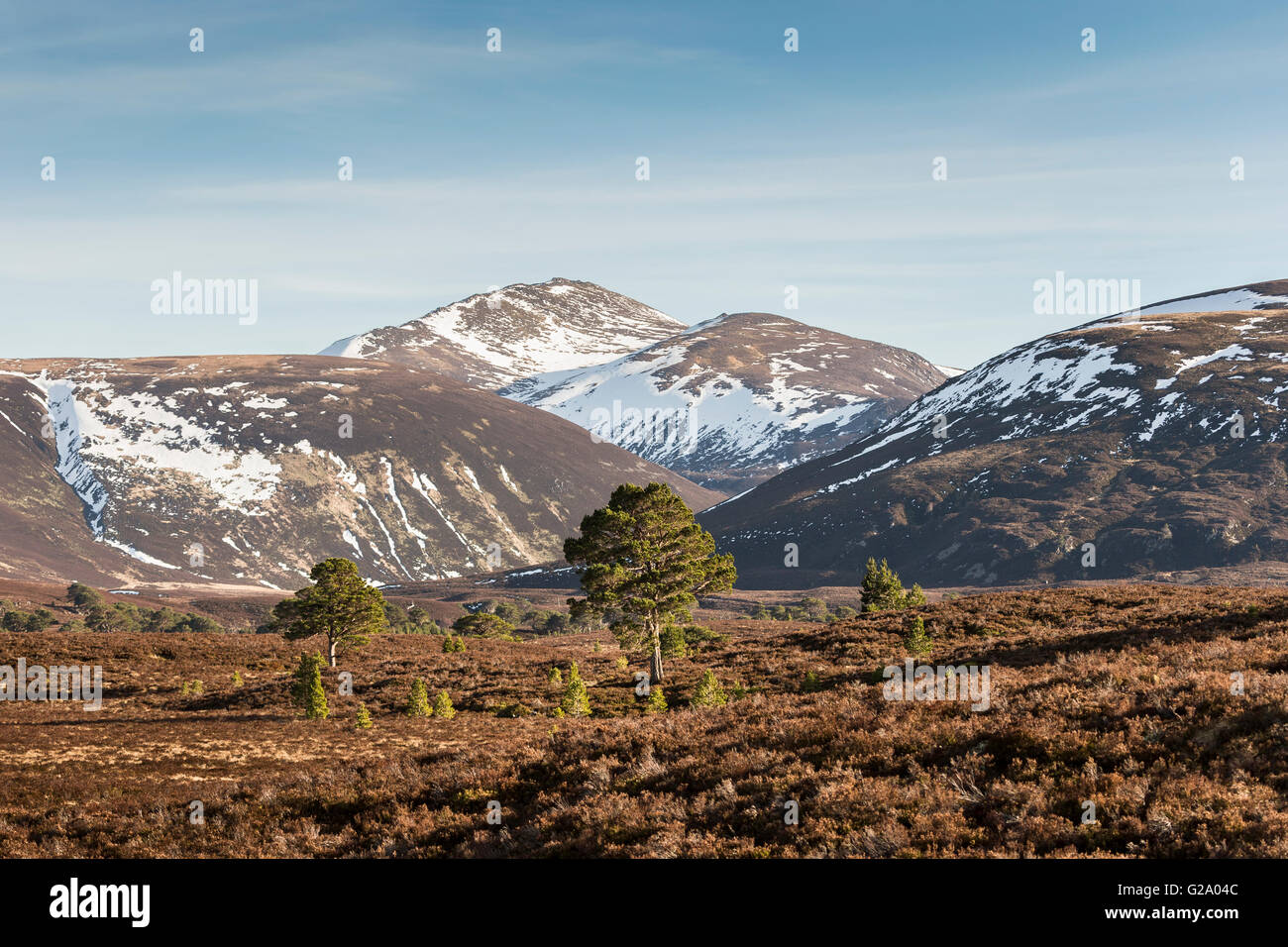 Bynack More and Bynack Ben from the Ryvoan Pass in the Cairngorms. - Stock Image