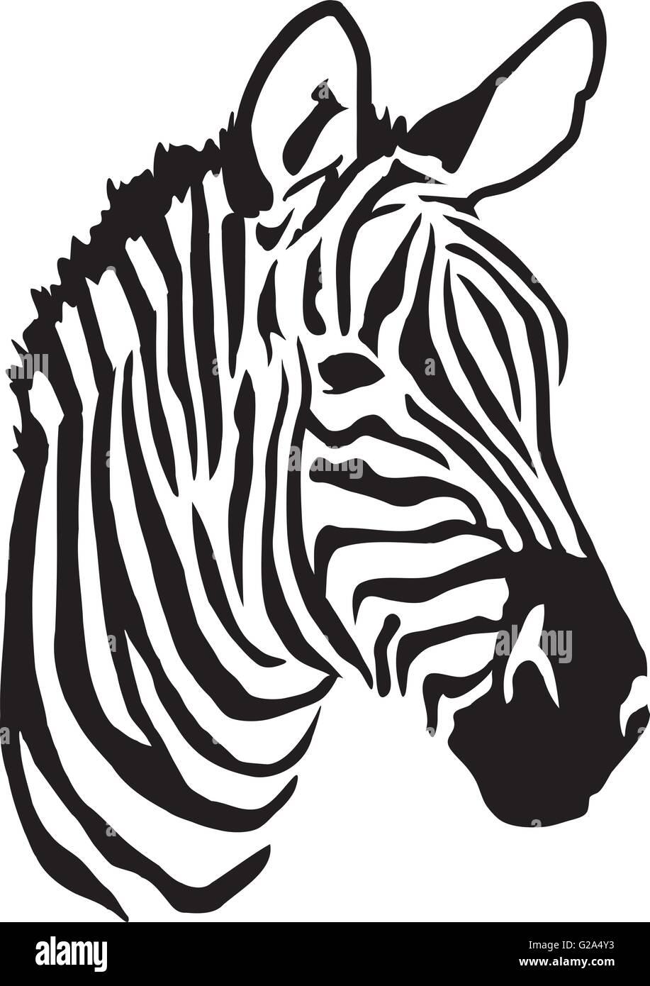 Zebra Vectors Stock Photos & Zebra Vectors Stock Images - Alamy