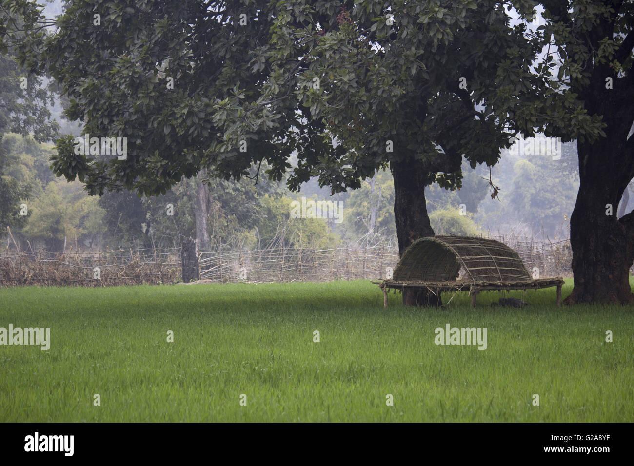 Fields and machan near bandhavgarh, Bandhavgarh Tiger Reserve outskirts, Madhya Pradesh, India Stock Photo