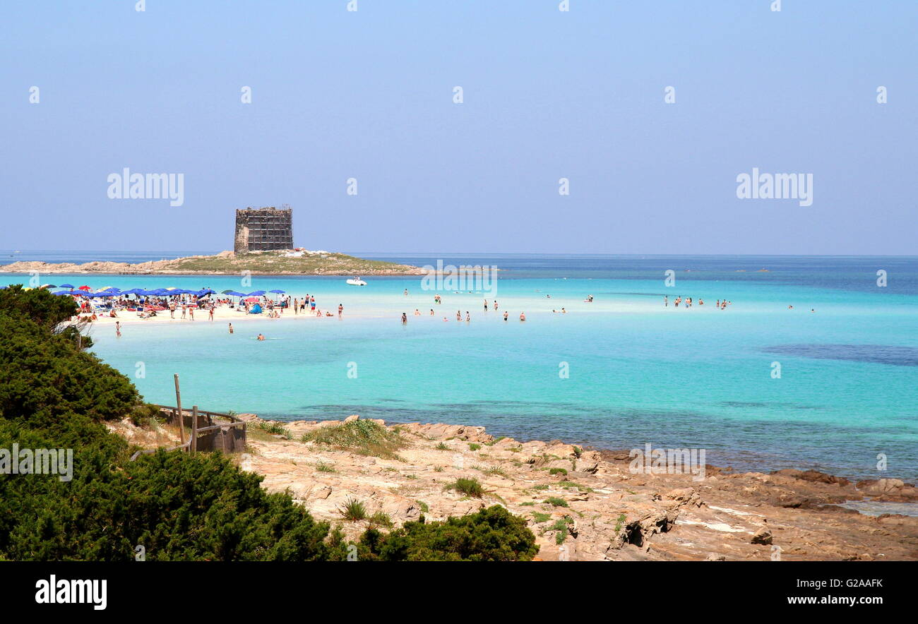 Cape Falcon, Northern Sardinia, pristine sands and warm shallow water crowded with visitors on a public holiday. - Stock Image