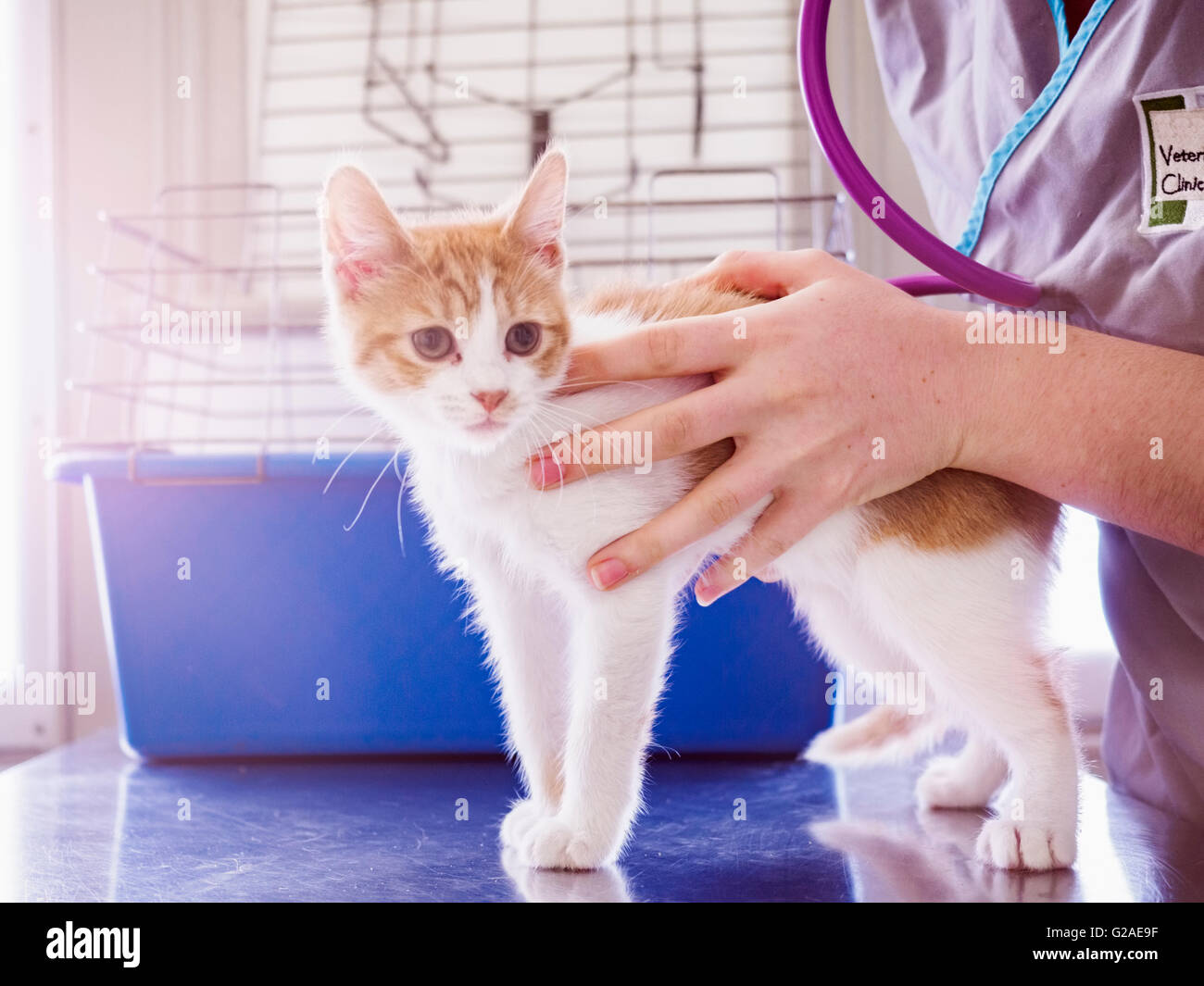 Vet examining kitten Stock Photo