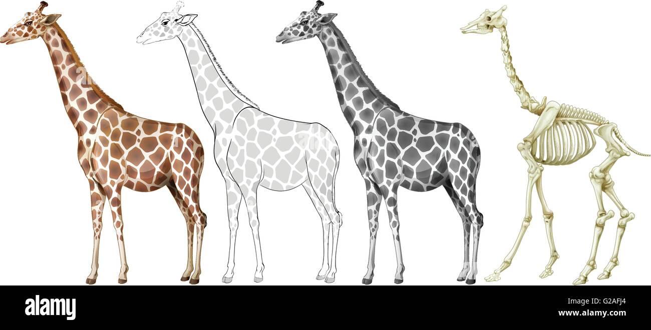 Giraffe and its bone structure illustration Stock Vector Art ...